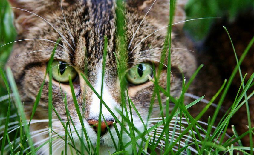Cats Pet