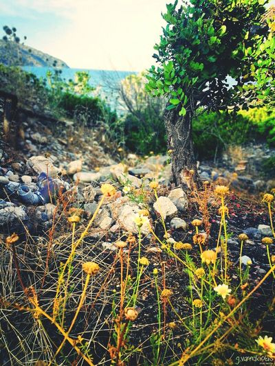 """The sense of color"" Alonetree Green Flowers Summermood Secretplace Photoshooting Crete Havania Beach Agios Nikolaos Nature No People Beauty In Nature Flower Head Water The Great Outdoors - 2017 EyeEm Awards"