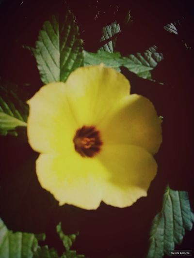 Homearea Taking Photos Black And Yellow  EyeEm Best Shots - NatureBlur Flowers Check This Out Photographer