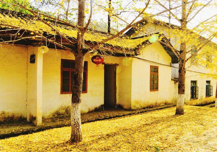 秋色 Architecture