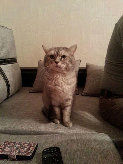 Cat♡ Love MyLove❤