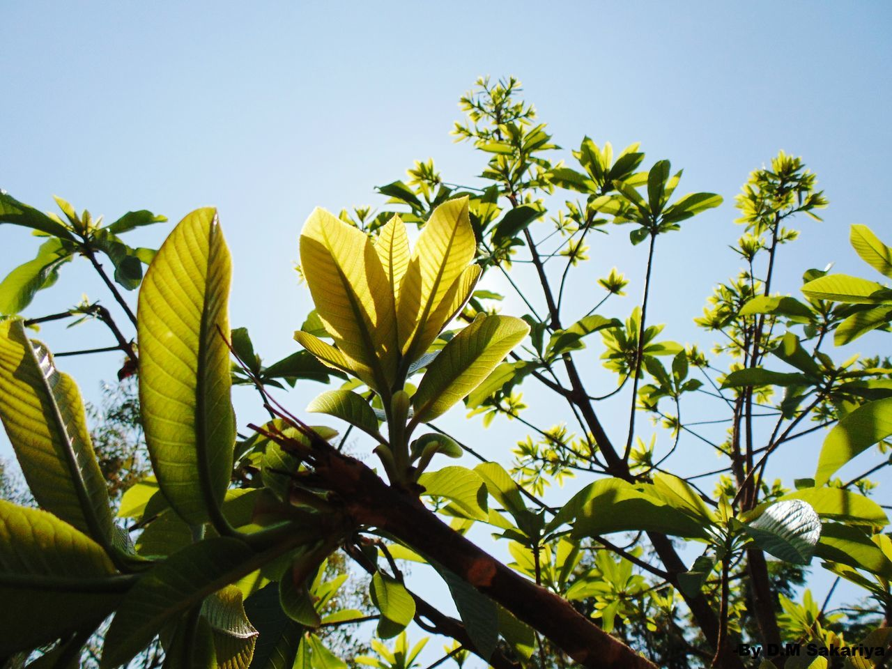 Low Angle View Of Plants Against Clear Sky