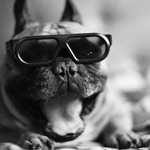 LG  Lg3d 3D Imax Gtcompany GTC Bullwatch Frenchzone Gonzothunder Frenchzoneonly Frenchielove Crazyfrenchielovers Frenchbulldog Frenchbulldogs Frenchie Frenchies Canon 50mm Doggie Dogs Dogsareawesome Gtcompany
