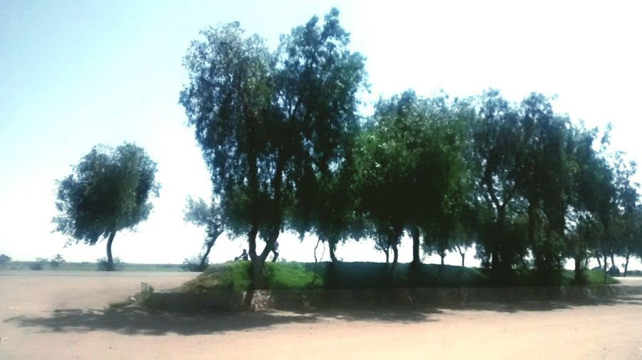 Tree Nature Water Beach Social Issues No People Wetland Outdoors Landscape Sand Sky Day Ecosystem  Nature Chiclayo-Peru Naturaleza🌾🌿 Cultura