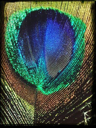 Artsy Closeup feather