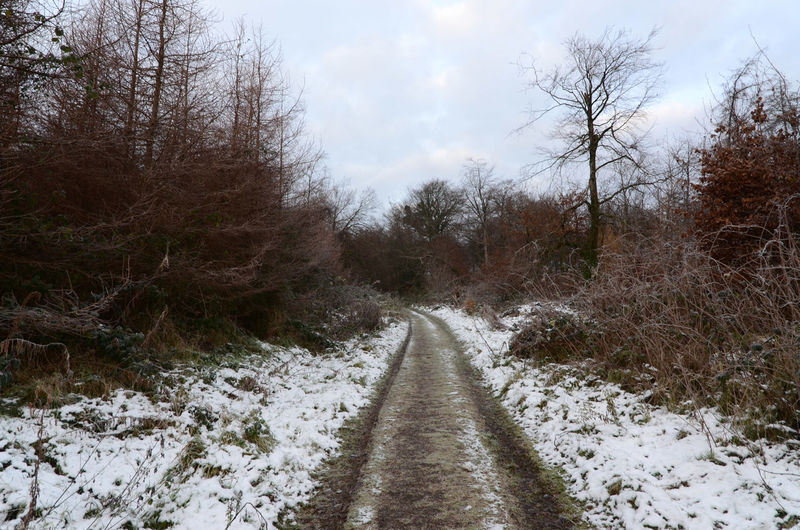 A very disappointing pre-Christmas snow fall. Cold Temperature Forest Track Outdoors Snow The Way Forward Tranquil Scene Winter