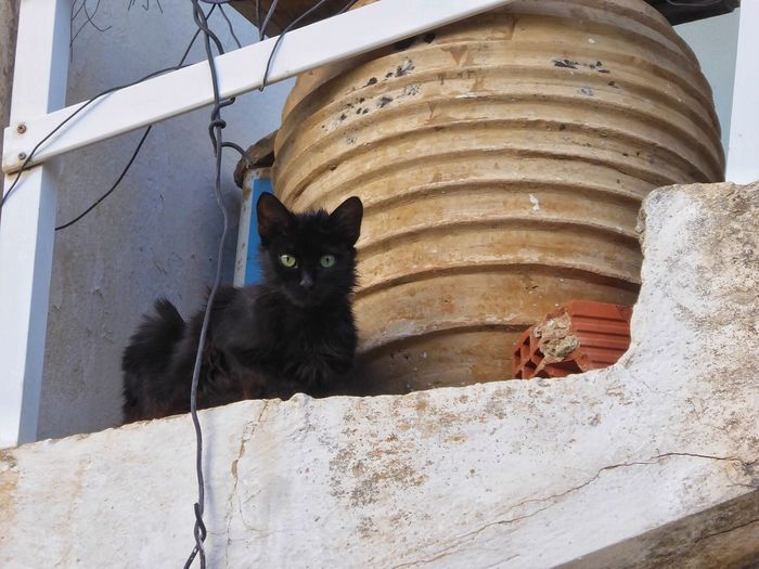 Cat Cats Cat♡ Cat Lovers Different Eye Color Cats Of Greece Cats 🐱 Catlovers