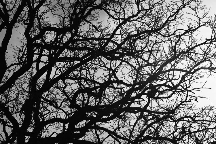 Trees Nature B&w First Eyeem Photo