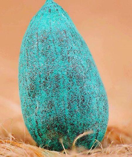 Seed Photograph
