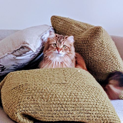 Portrait of cat relaxing in cushions