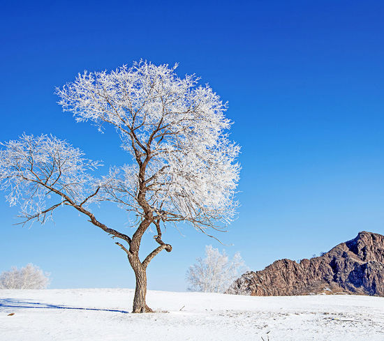 EyeEm Selects Tree Clear Sky Blue Mountain Sky Landscape Close-up Single Tree Snowcapped Waterfall Oak Tree Snow Covered Patchwork Landscape