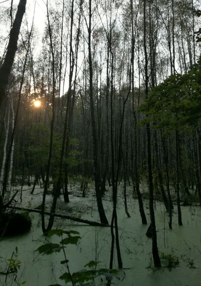 Tree Forest Water Bare Tree Sky HUAWEI Photo Award: After Dark