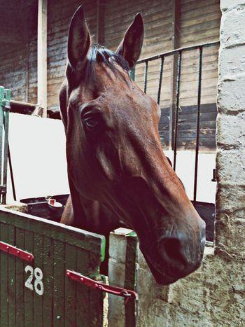 Walter Horse Beauty