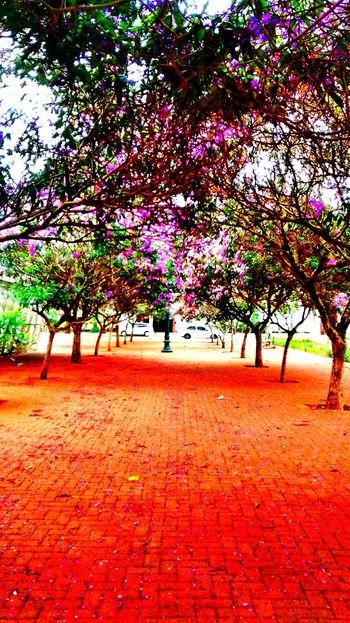 Caminho Summer ☀ Praça  Brazil Paraná