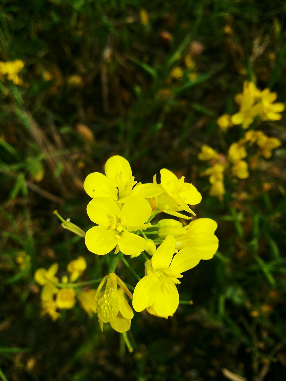 flower, nature, growth, beauty in nature, yellow, petal, fragility, plant, freshness, blooming, outdoors, no people, flower head, close-up, day