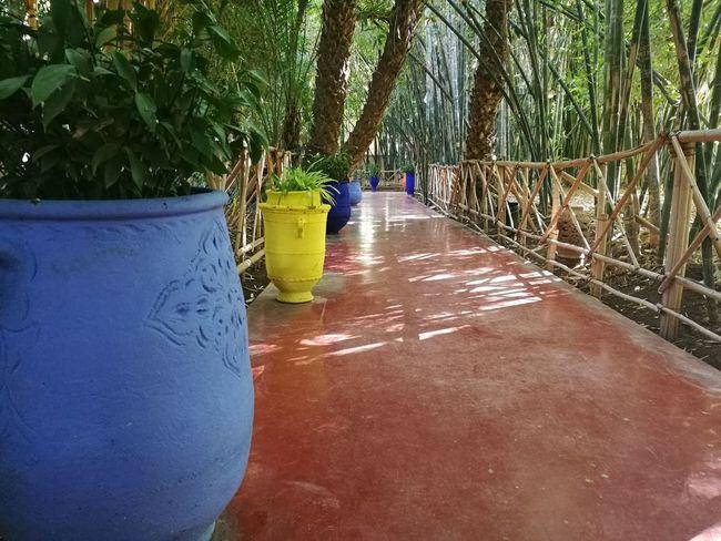Botanical Garden Colorful Famous Place Garden Majorelle Memorial Morocco Saint Laurent Travel Destinations