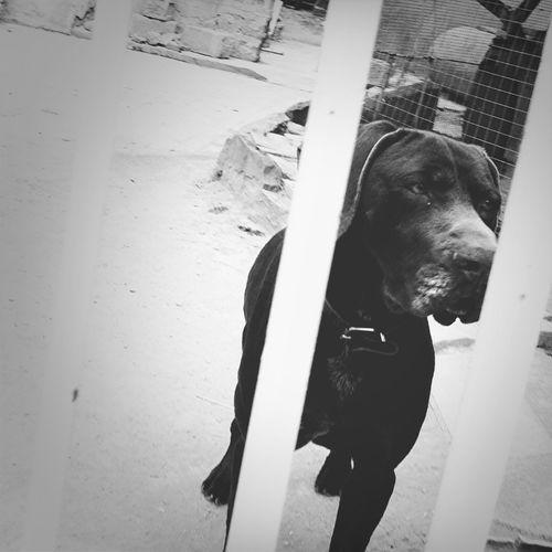 Streetphotography Blackandwhite Dog Duckface Dog