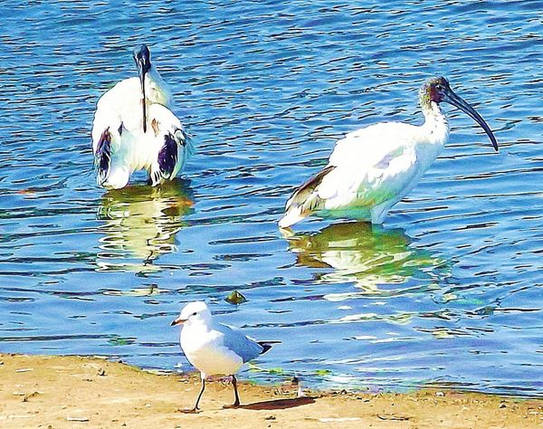 Bird Photography Walking Around Enjoying The Sun Birdwatching Australian Wildlife