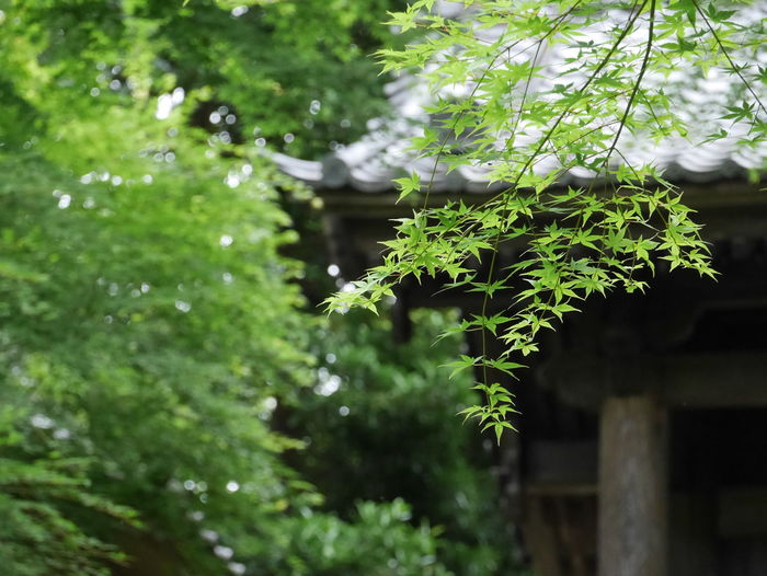 Green Green Color Nature Beauty In Nature Branch Built Structure Close-up Day Focus On Foreground Green Color Growth Leaf Nature No People Outdoors Plant Plant Part Tree