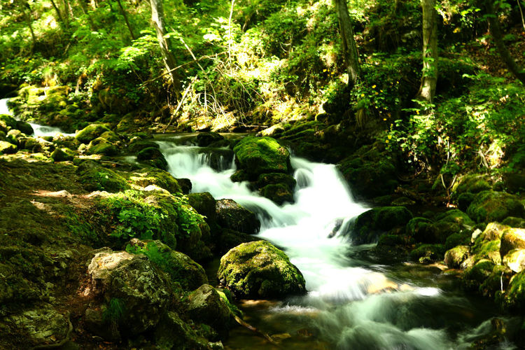 Water Beauty In Nature Forest Motion Tree Flowing Water Scenics - Nature Long Exposure Nature Rock Plant Solid Blurred Motion Flowing No People Rock - Object River Waterfall Moss Outdoors Stream - Flowing Water Rainforest Running Water Purity Power In Nature