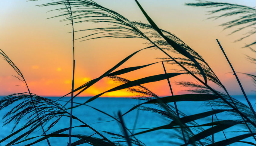 Sunset Sky Beauty In Nature Plant Tranquility Silhouette No People Growth Orange Color Close-up Nature Scenics - Nature Tranquil Scene Tree Cloud - Sky Focus On Foreground Outdoors Low Angle View Grass Idyllic Palm Leaf Timothy Grass Blade Of Grass