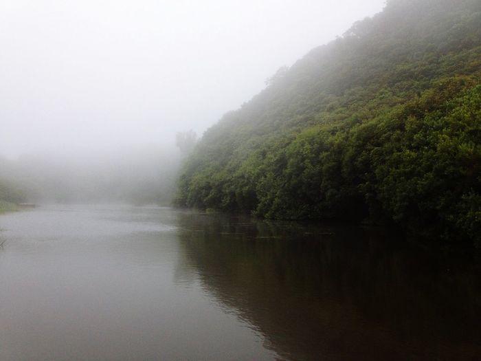 Fog Lake Trees Ireland Northern Ireland Discover Northern Ireland Discover Ireland Stillness Water Reflections