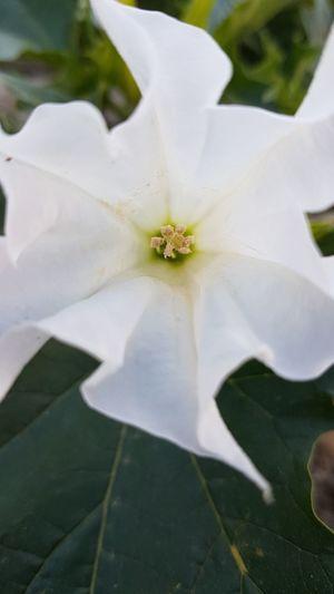Flower Flower Head Summer Close-up