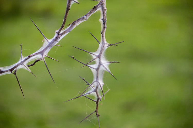 Close-up of dry leaf on branch