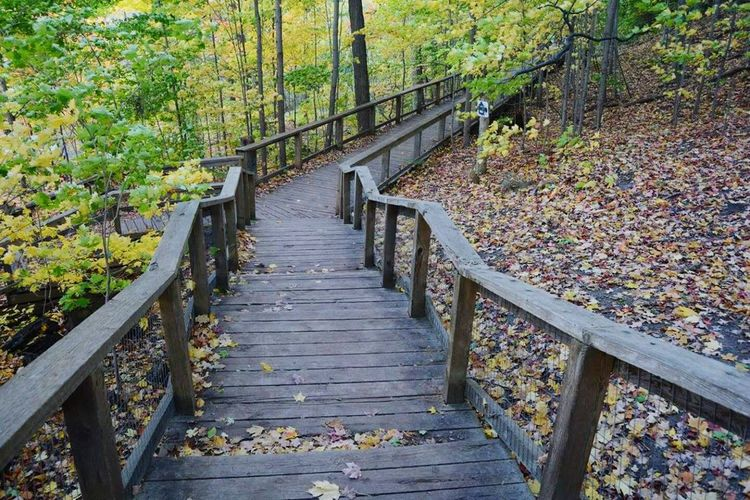 Beauty In Nature Tree The Way Forward Railing Steps And Staircases Nature Day Growth Tranquility Outdoors No People Staircase Beauty In Nature Woodstep Walkway Move Forward
