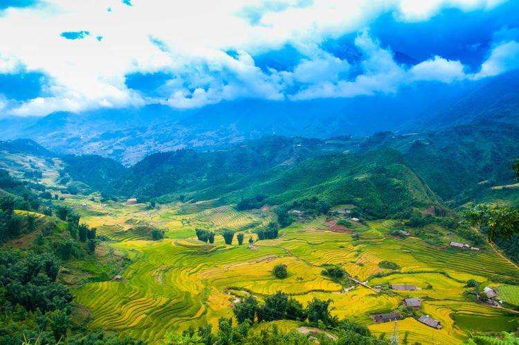 Rice Fields Sapa Mu Cang Chai Rice Paddy Agriculture Beauty In Nature Cloud - Sky Day Field Growth Idyllic Landscape Mountain Mountain Range Mu Cang Chai - Yen Bai Nature No People Outdoors Patchwork Landscape Rice Fields  Rice Fields And Water Rice Fields Bali Rural Scene Scenics Sky Tranquil Scene Tranquility Tree