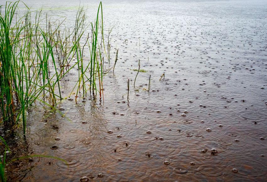 Rain Rainy Days Beauty In Nature Lake Land Nature No People Outdoors Plant Scenics - Nature Water