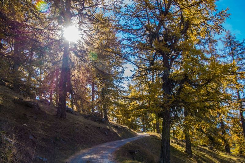 col of lien,valais,swiss Tree Plant Beauty In Nature Sunlight Tranquility Forest Land Nature Sunbeam No People Day Sky Scenics - Nature Autumn Tranquil Scene Non-urban Scene Lens Flare Growth Environment Sun Outdoors WoodLand Change Streaming Bright