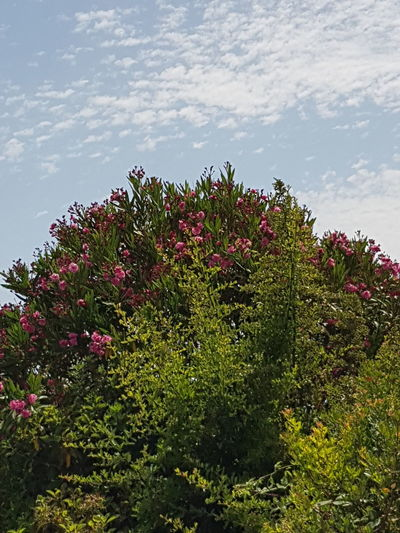 Close-up of flowers blooming on plant against sky