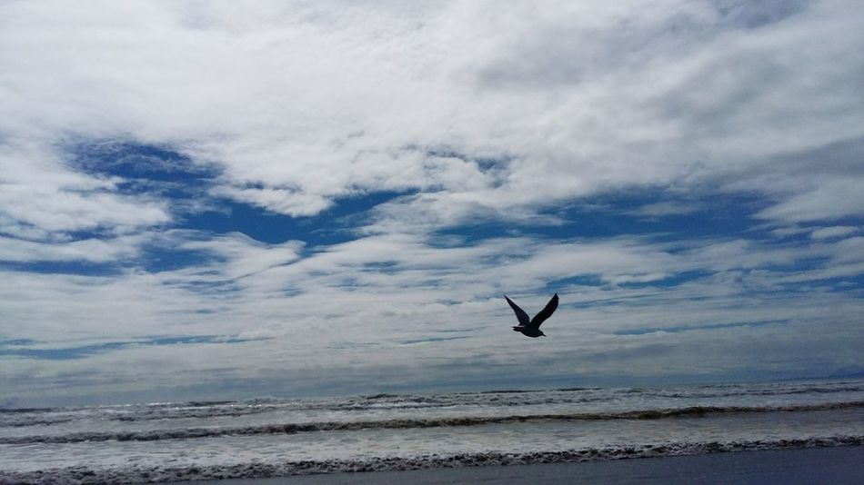 sky sea seagull Photography In Motion
