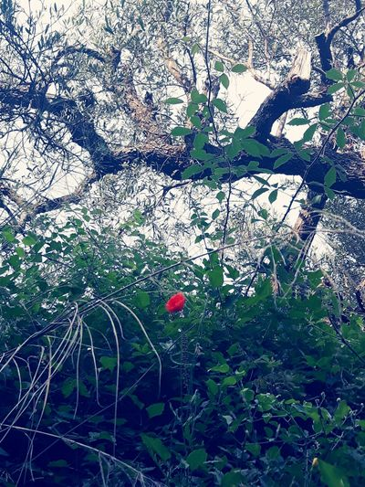 red on green Palasë In Colors Red Flower Leaves🌿 Contrast Single Flower Nature Backgrounds Tree Full Frame Close-up Blooming Plant Life Growing Fragility Single Flower