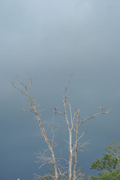 when my time comes... Dark Clouds EyeEmNewHere Seaside Windy Day Tree Flying Branch Rural Scene Bare Tree Dead Plant Dead Tree Lone