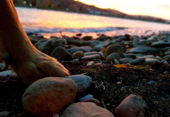 #Doglife #Hund #dogoftheday #doglover #Nature  #naturelove Low Section Sunset Beach Pebble Beach Sea Water Sky