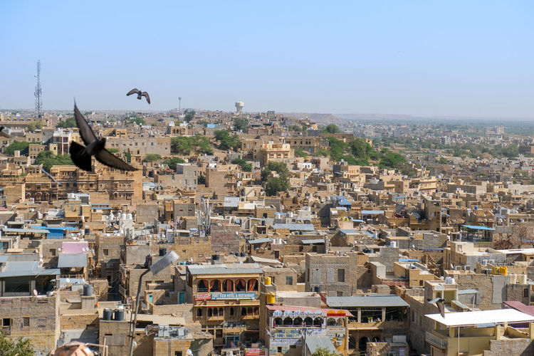 Panoramic view of bird flying against cityscape of the golden city of jaisalmer, india