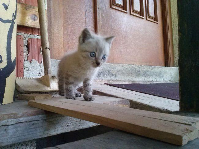Cat Legolas
