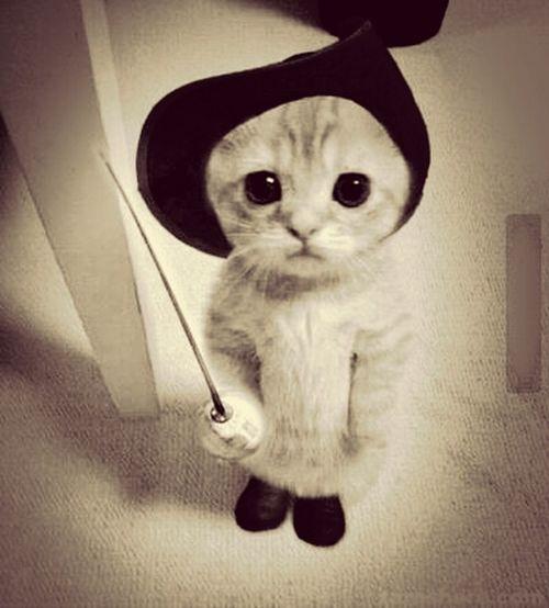 cats#potté#cute#love