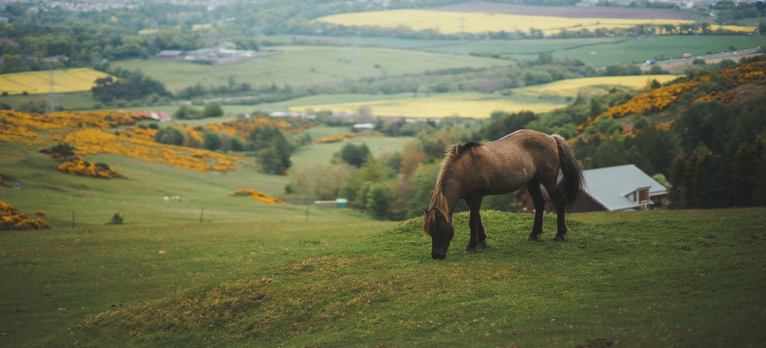 Panoramic view of a pony on a wide open ranch in the scottish hills