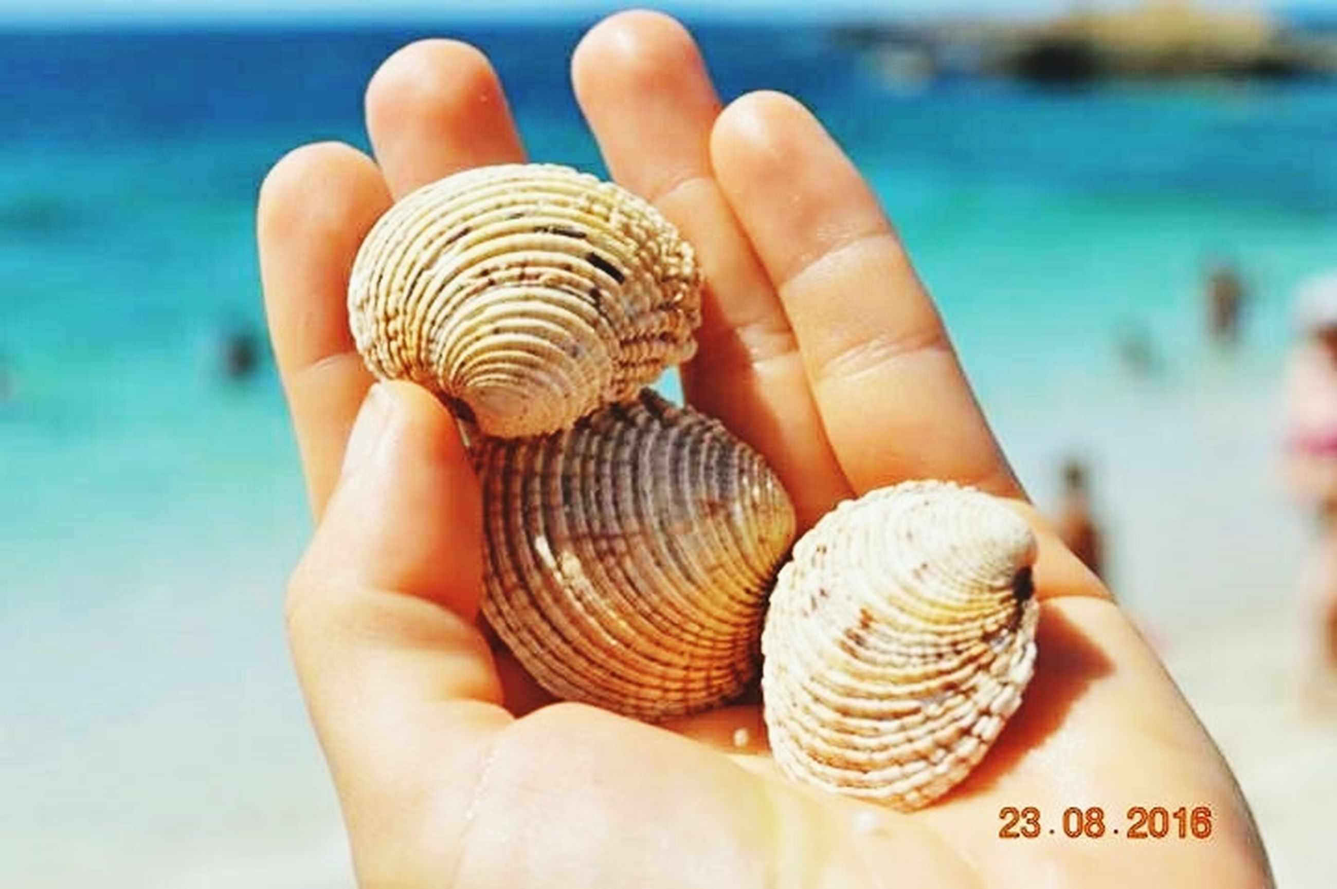human body part, human hand, sea, animal shell, beach, seashell, palm, sand, water, vacations, outdoors, summer, beauty, one person, nature, close-up, people, sea life, adult, one woman only, adults only, only women, hermit crab, day