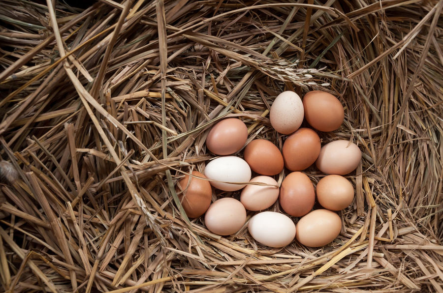 fresh chicken eggs with nest,A pile of brown eggs in a nest Strawhat Chicken Animal Egg Animal Nest Beginnings Bird Nest Brown Close-up Day Directly Above Egg Egg Carton Eggs Food Food And Drink Fragility Freshness Hay Healthy Eating High Angle View Indoors  Nest New Life No People Straw