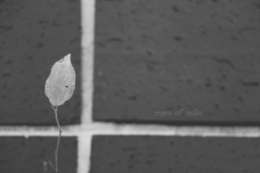 Nature Autumn Park Autumn Collection Eye Em Nature Lover Design Photo Leaf Monochrome Japan Tokyo Autumn Colors 晩秋 壁画art Blackandwhite 残り1枚…