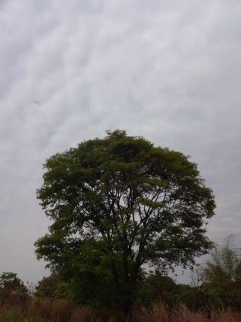 Cerrado vegetation. Goias State. Treegasmic Tuesday TreePorn Tree Nature_collection