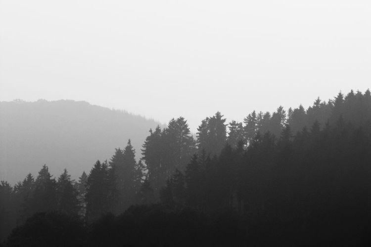 Fog Foggy Idyllic Landscape Mountain Mountain Range Tranquil Scene Tranquility Tree WoodLand