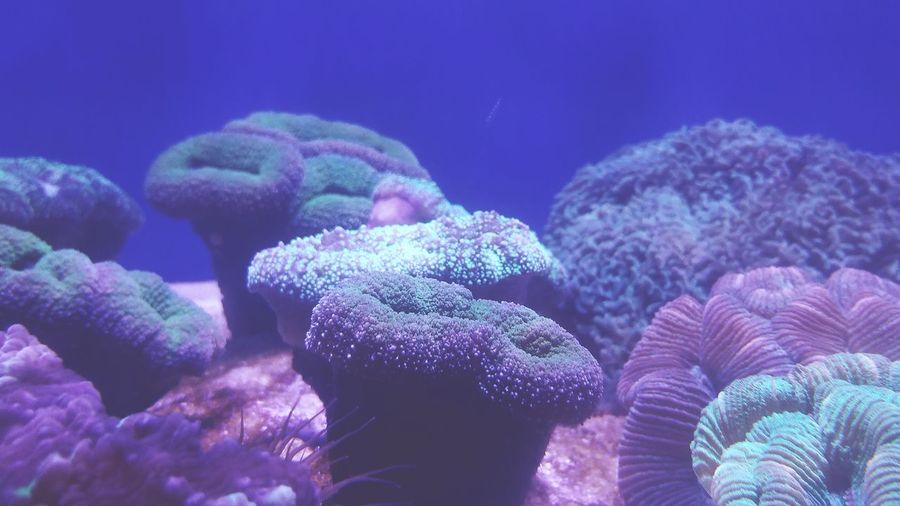 Close-up of coral underwater