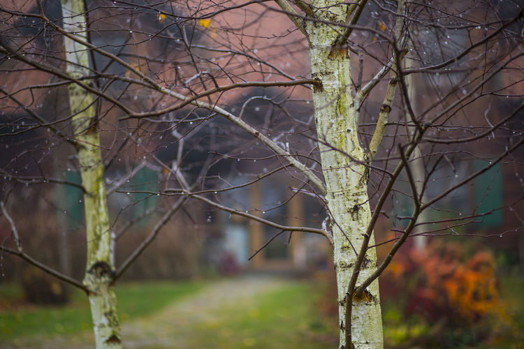 Tree Plant Bare Tree Branch Nature Focus On Foreground No People Land Trunk Outdoors Day Tree Trunk Forest Autumn Tranquility Selective Focus Growth Beauty In Nature Architecture Built Structure