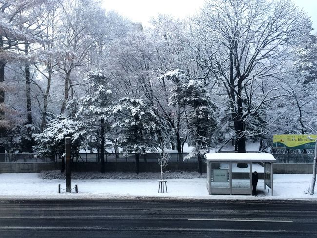 Snow Fall My Best Photo 2015 Urban Nature White And Green It's Cold Outside Colour Your Horizn Modern Workplace Culture Stories From The City