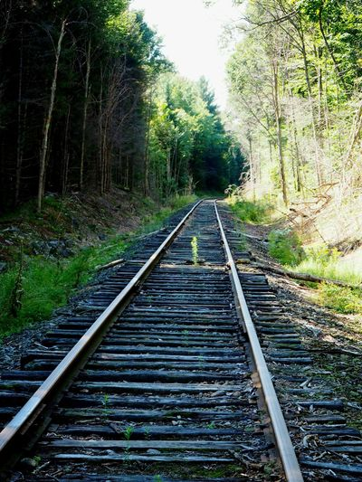 Road to no where Train Railway Labor Day Weekend Adirondacks Forest
